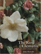 Rose and the Clematis