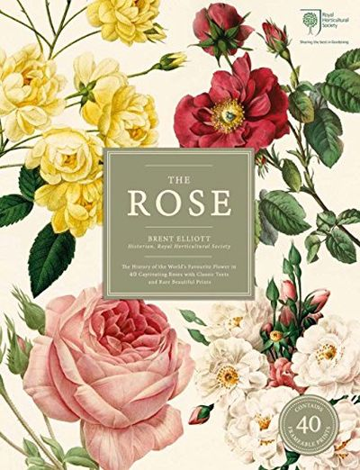 The Rose; foto: The Rose: The History of the World's Favourite Flower: 8890
