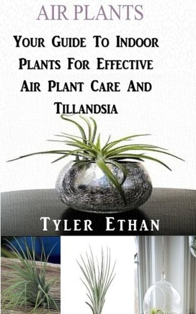 Air Plants: Your Guide To Indoor Plants For Effective Air Plant Care And Tillandsia