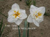 Narcis Dolly Mollinger